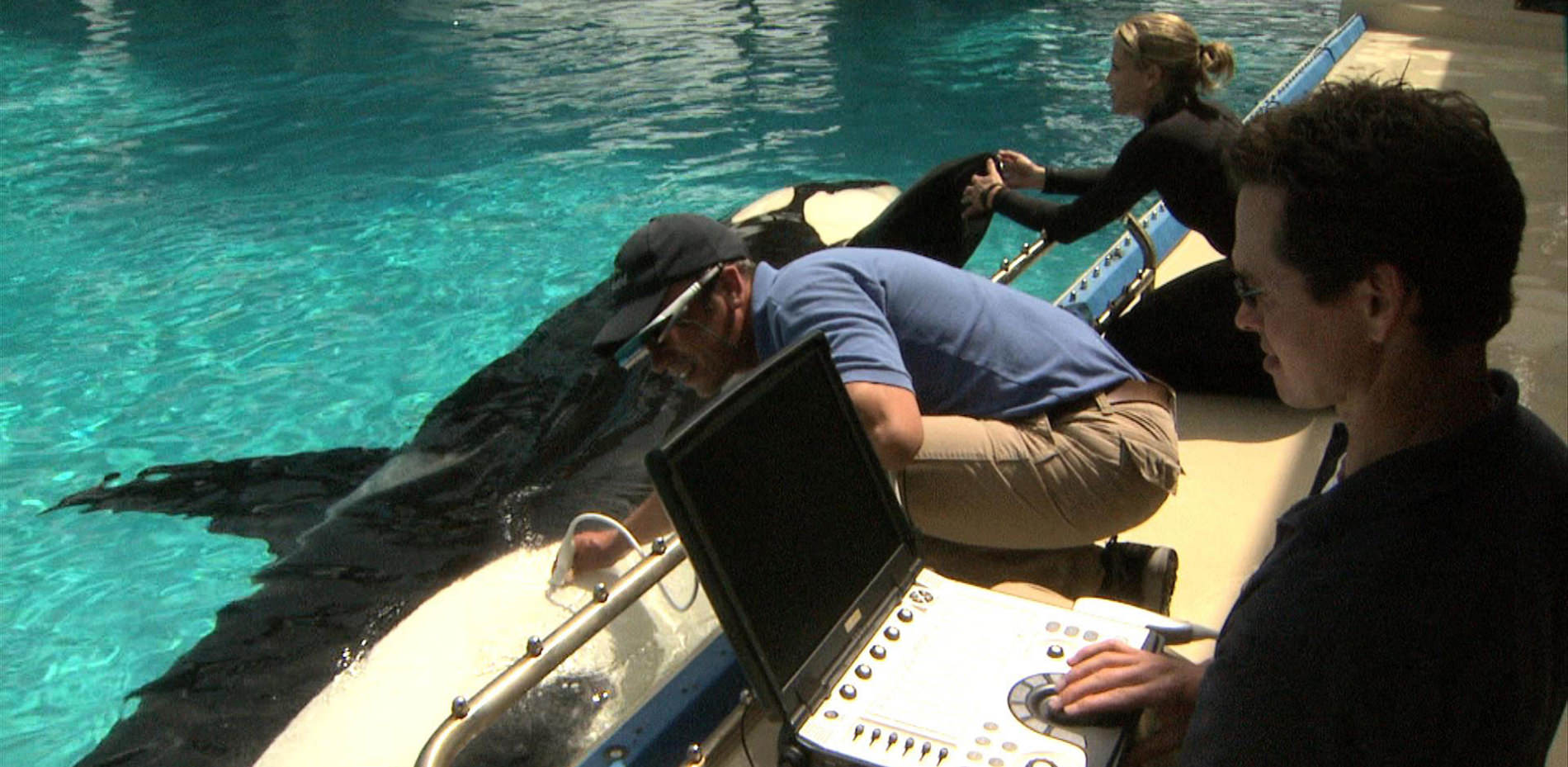 Veterinarian taking an ultrasound of a killer whale poolside