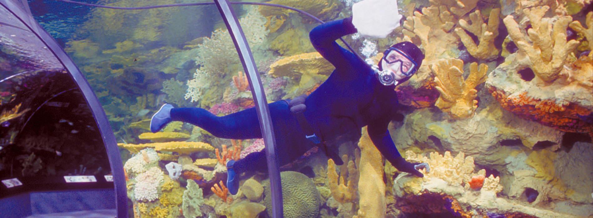 A scuba diver cleaning the aquarium
