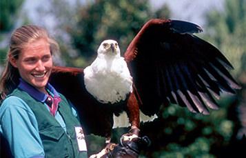 aviculturist holding raptor