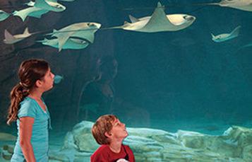 男孩和女孩在看水族馆魟