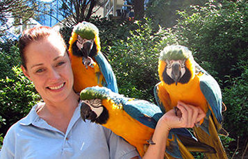 aviculturist holding three macaws