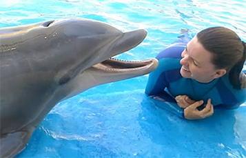 海洋世界驯兽师与宽吻海豚