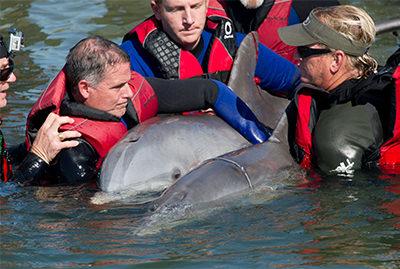 海洋世界救援队有两个宽吻海豚