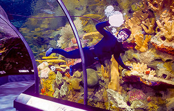 Aquarist in aquarium
