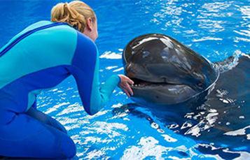 海洋世界的动物特雷诺与领航鲸