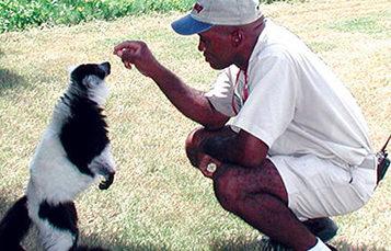 动物学工作者领狐猴