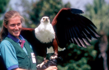 Female trainer holding an eagle with it's wings spread