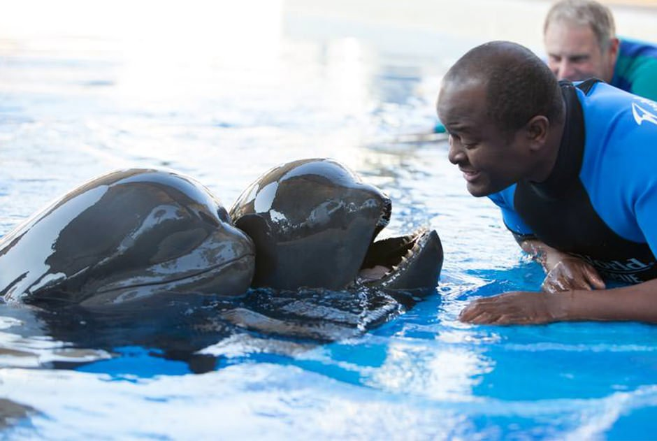 A trainer interacts with two cetaceans at the edge of a pool