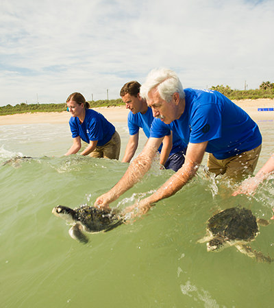 A rescue team releases sea turtles into the ocean