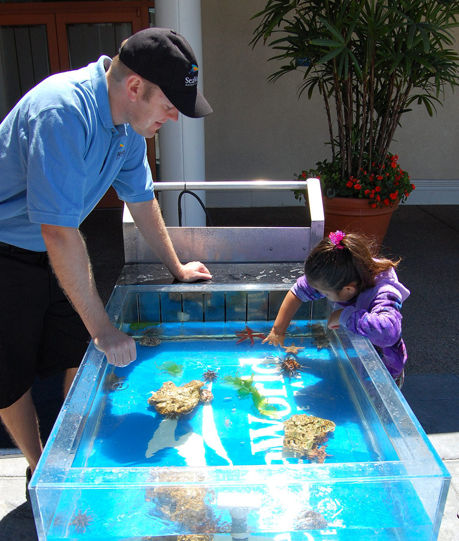 A child touches a sea urchin in a small tank while an educator observes