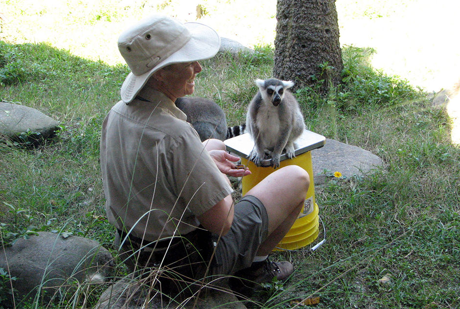 A zoo employee sits with a lemur