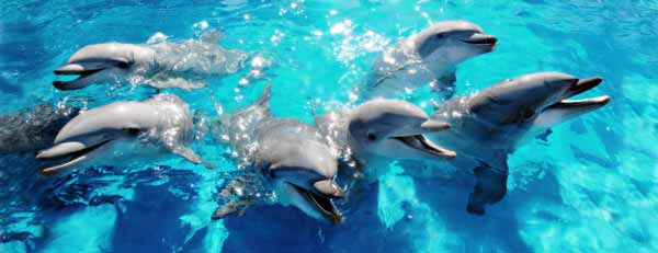 Six dolphins
