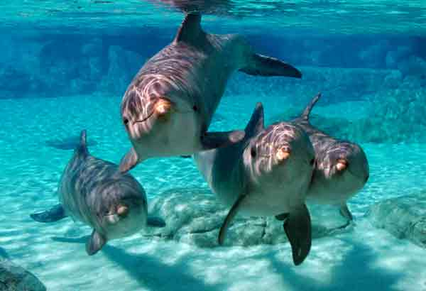 Group of six dolphins