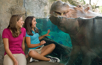 10-College Overnight Camps at Busch Gardens Tampa Bay