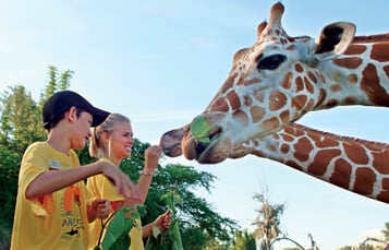 9-12 Day Camps at Busch Gardens Tampa Bay