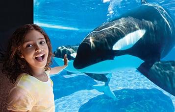 Orca Underwater Viewing at SeaWorld Orlando