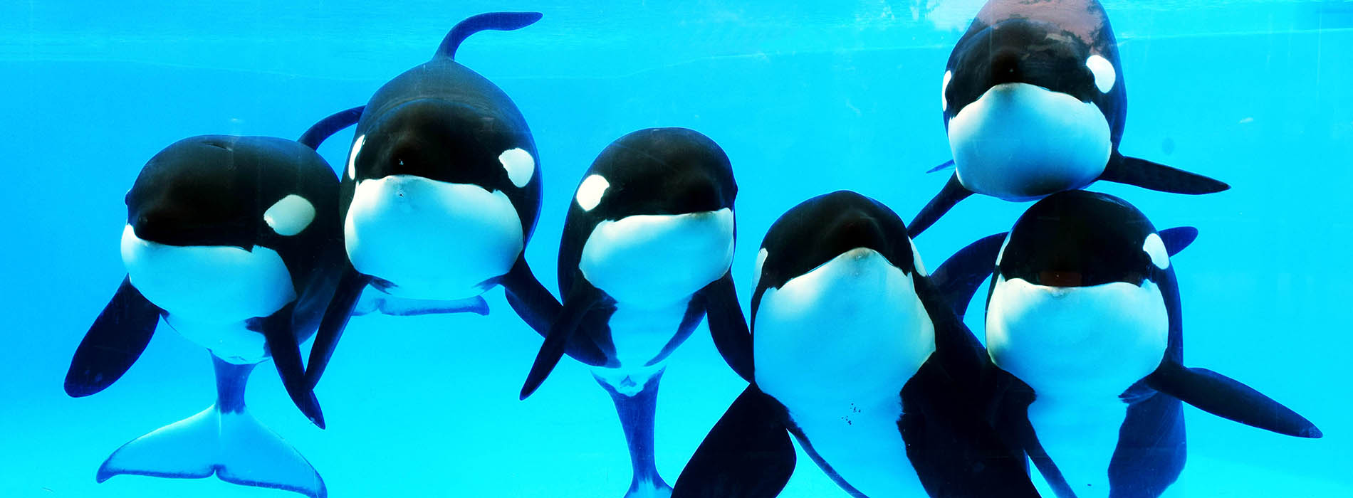 Killer Whale Trainer Talk at SeaWorld Orlando