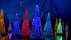 Sea of Trees at SeaWorld Orlando Christmas Celebration