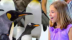 Penguins at SeaWorld.
