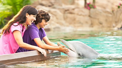 Tickets and Passes Image Dolphin