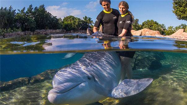 Swim with Dolphins at Discovery Cove Orlando