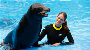 Sea Lion with Girl