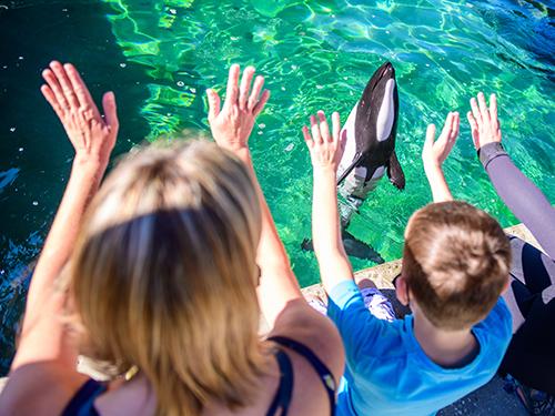Aquatica Orlando Commerson Dolphin Experience