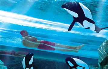 Dolphin Plunge located at Aquatica water park in Orlando, Florida
