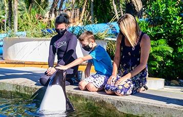 Commerson's dolphin close up tour at Aquatica Orlando