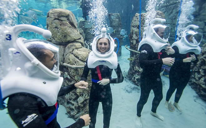 Tips for Snorkeling at Discovery Cove Orlando