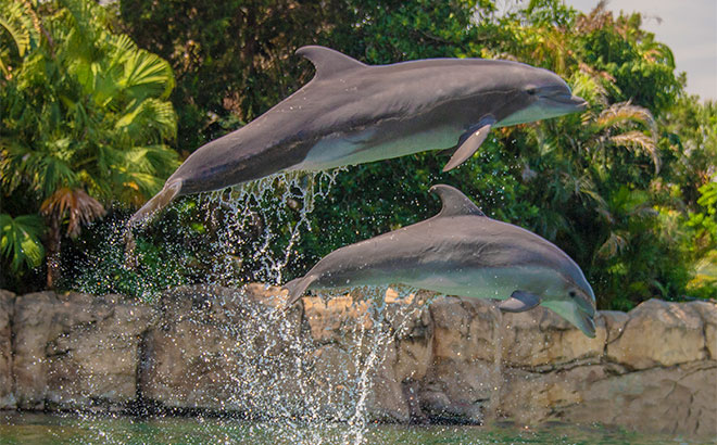 Meet Astra and Skye at Discovery Cove