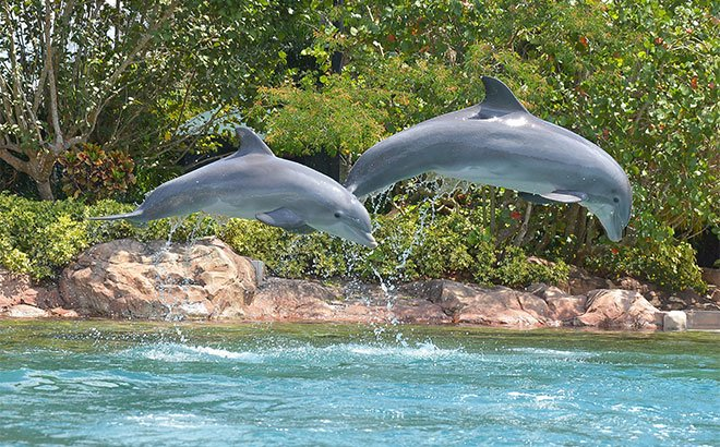 Meet Roxy and Cona at Discovery Cove