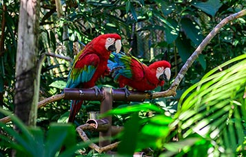 Parrots in the Explorers Bird Aviary at Discovery Cove Orlando
