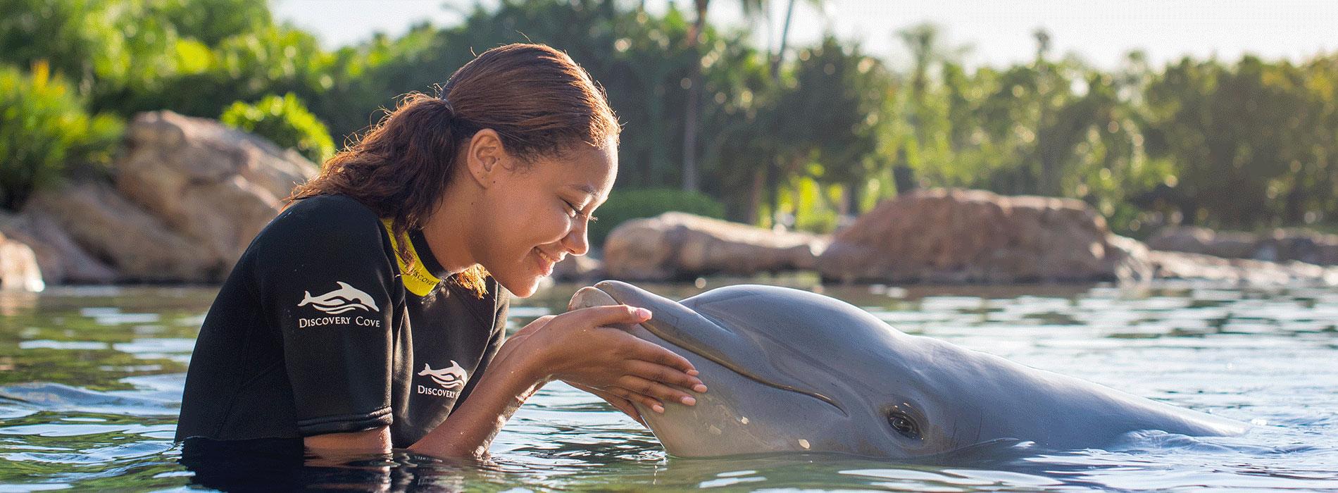 Dolphin Lagoon Desktop