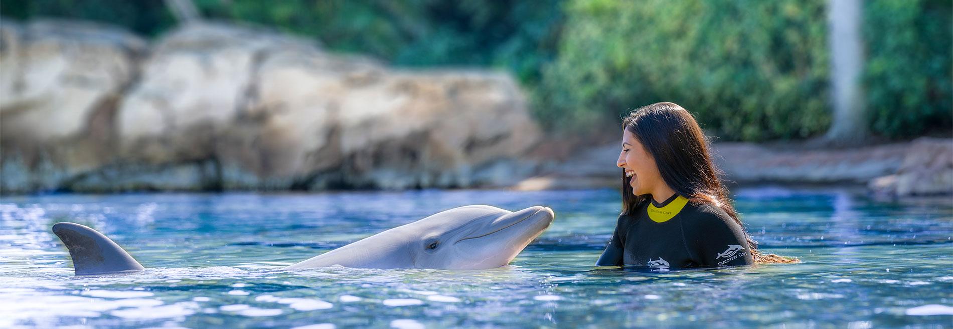 Dolphin Lagoon at Discovery Cove Orlando