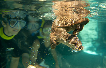 Swim alongside playful otters at Discovery Cove.
