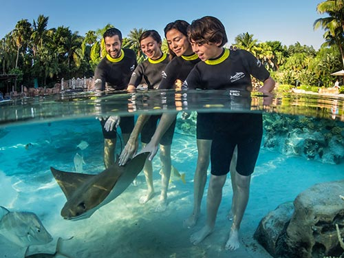 Swim with rays at Discovery Cove Orlando