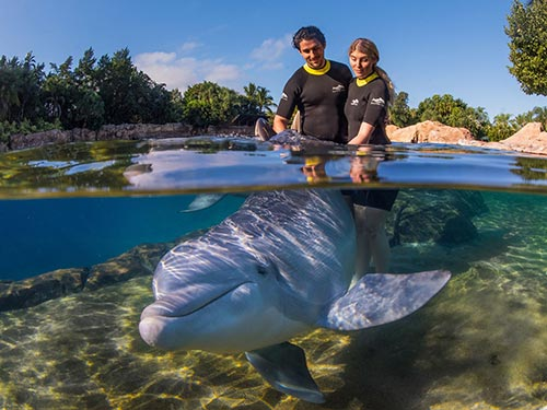 Swim with a dolphin at Discovery Cove Orlando