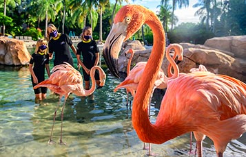 Flamingo Mingle upgrade experience at Discovery Cove Orlando