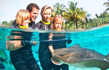 Feed rays and tropical fish at Discovery Cove.