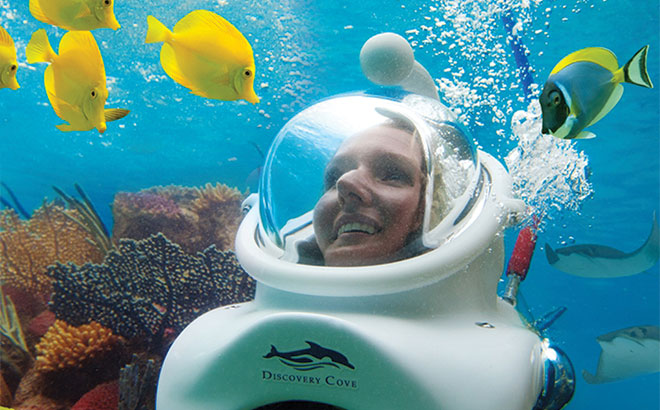 Take an underwater walking tour with SeaVenture at Discovery Cove.