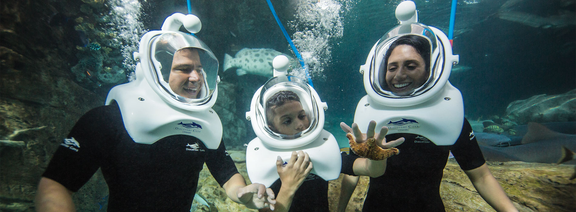 Take an underwater tour of the tropical reef habitat for thousands of tropical fish at Discovery Cove.