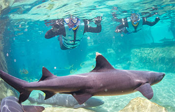 Swim with sharks at Discovery Cove.
