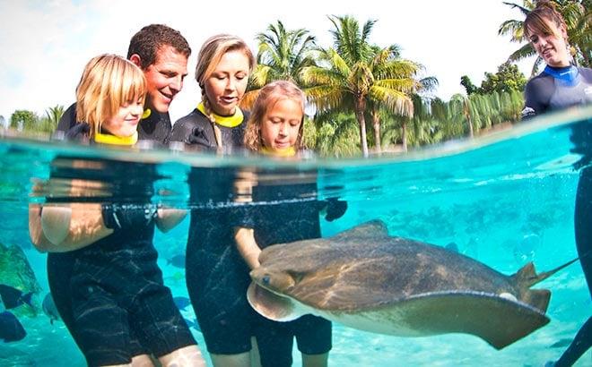 Discovery Cove Ray Feeding