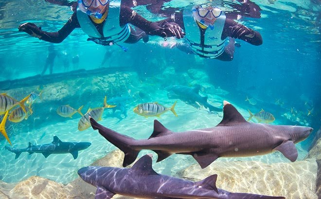 Discovery Cove Shark Swim