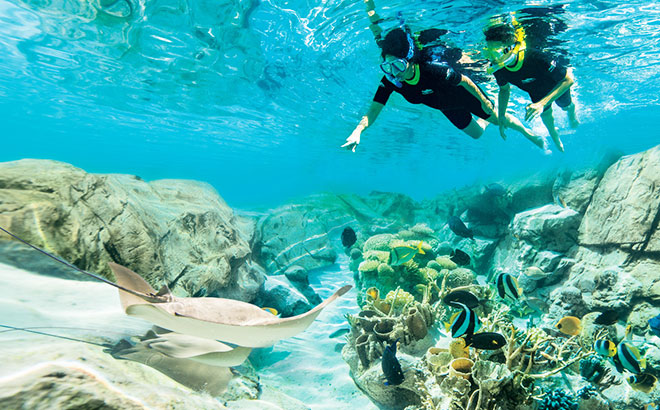 Snorkel with thousands of tropical fish at Discovery Cove.