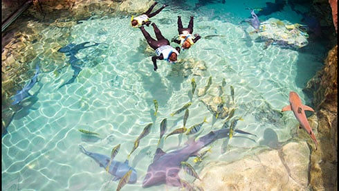 Park Accessibility Program at Discovery Cove Orlando