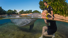 About Discovery Cove