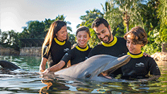 Discovery Cove Swim with Dolphins