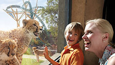 Visit Busch Gardens in Tampa Bay
